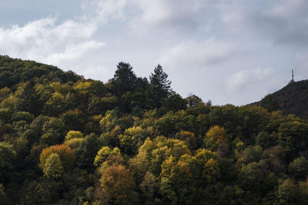 Baumkronen im Wald die teilweise in verschiedenen Gelb- und Orangetönen gefärbt sind