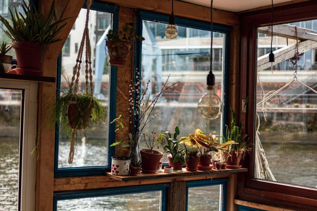 Mehrere kleine Zimmerpflanzen stehen auf einer Fensterbank aus Holz auf einem Hausboot mit Blick auf das Wasser.