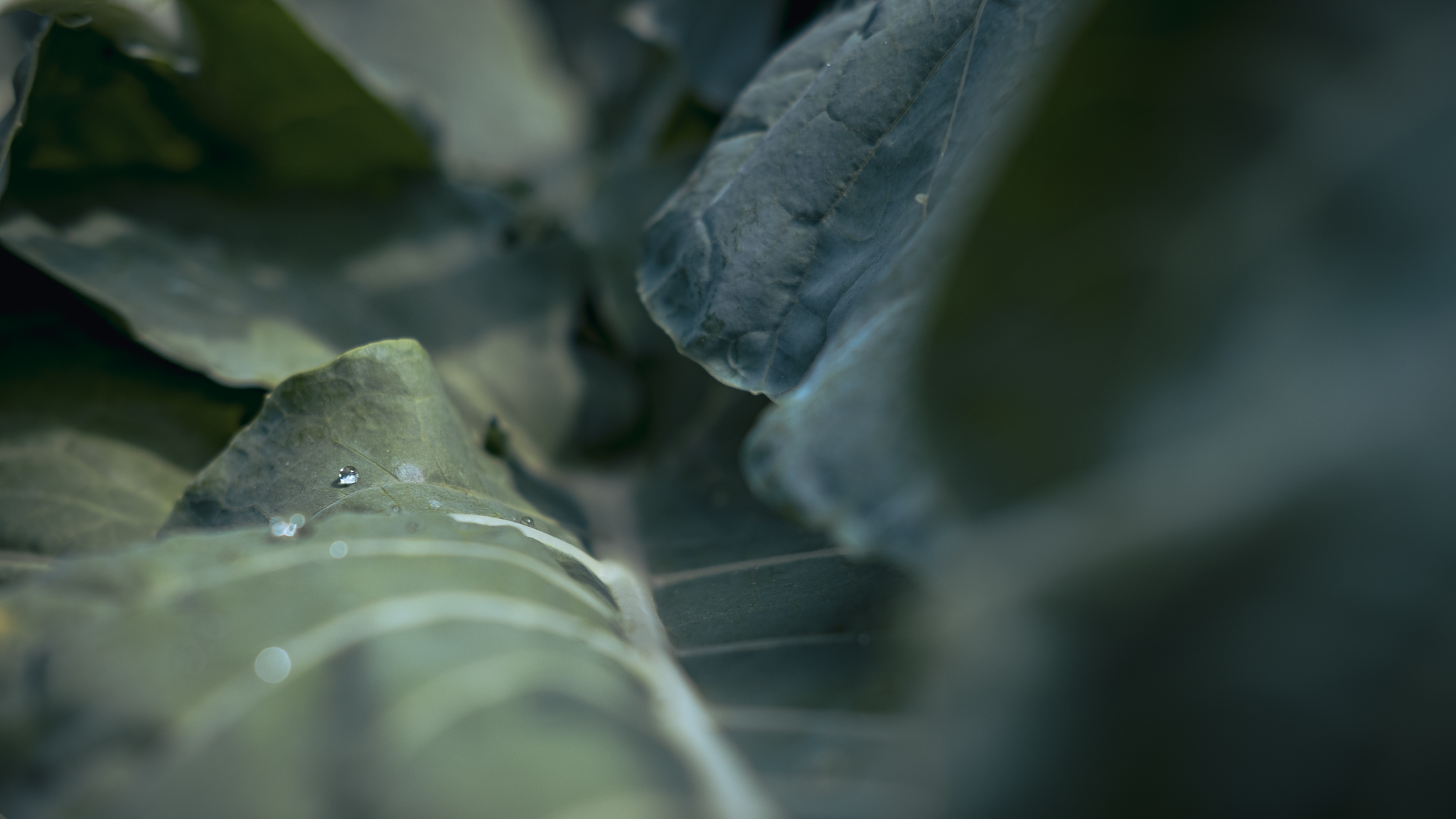 In mitten von großen grünen Blättern liegt ein einzelner kleiner Wassertropfen auf einem Blatt und funkelt in der Sonne.